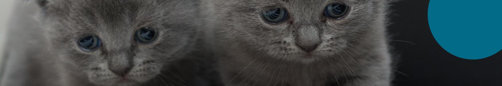 באנר חתולים 1